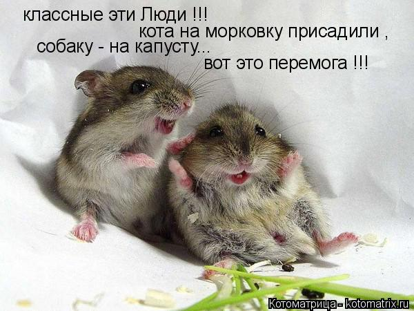 Котоматрица: классные эти Люди !!! кота на морковку присадили , собаку - на капусту... вот это перемога !!!