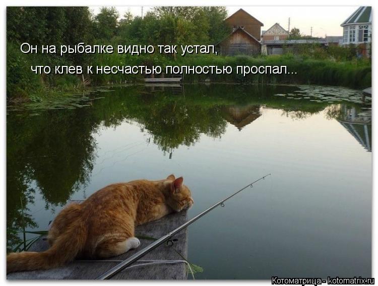 Котоматрица: Он на рыбалке видно так устал, что клев к несчастью полностью проспал...