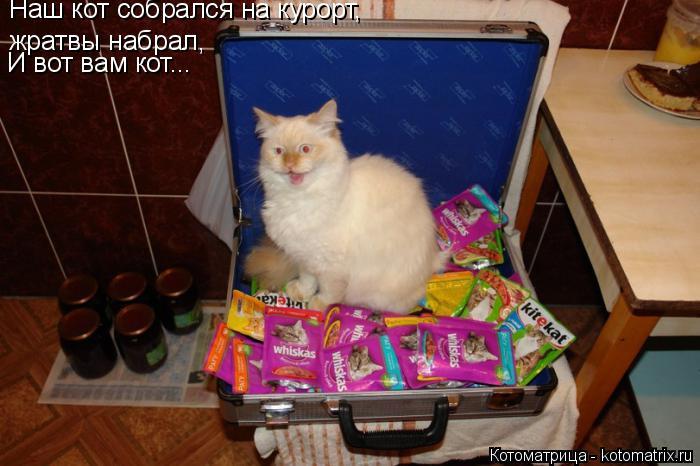 Котоматрица: Наш кот собрался на курорт, жратвы набрал, И вот вам кот...