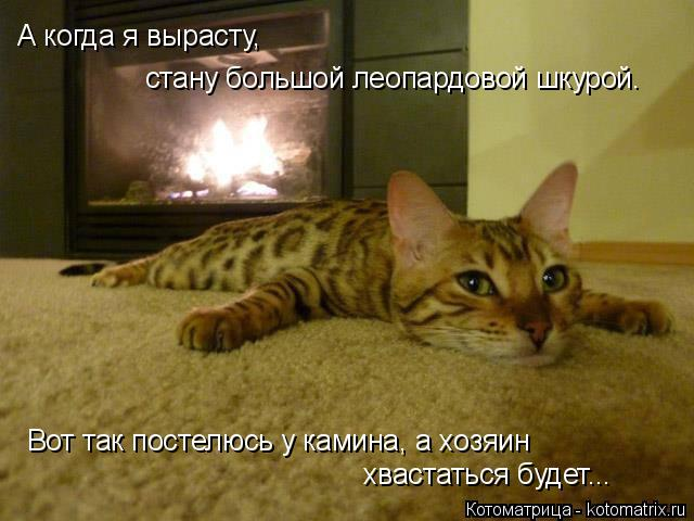 Котоматрица: А когда я вырасту,  стану большой леопардовой шкурой. Вот так постелюсь у камина, а хозяин хвастаться будет...