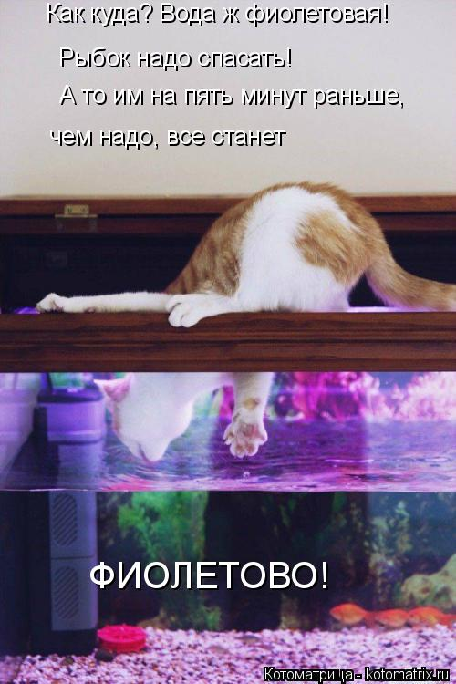 Котоматрица: Как куда? Вода ж фиолетовая! Рыбок надо спасать! А то им на пять минут раньше,  чем надо, все станет ФИОЛЕТОВО!