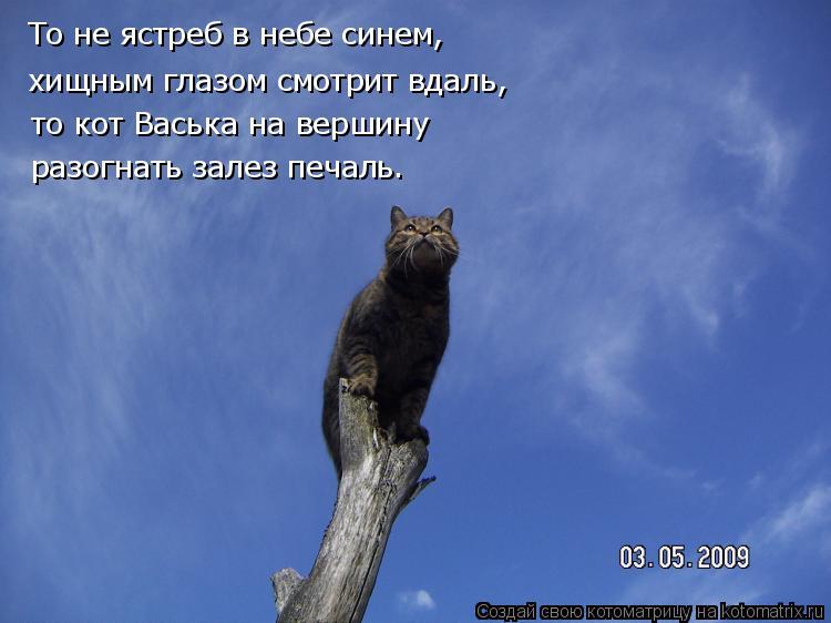Котоматрица: То не ястреб в небе синем, хищным глазом смотрит вдаль, то кот Васька на вершину разогнать залез печаль.