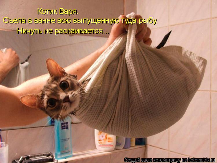 Котоматрица: Котик Варя. Съела в ванне всю выпущенную туда рыбу. Ничуть не раскаивается...