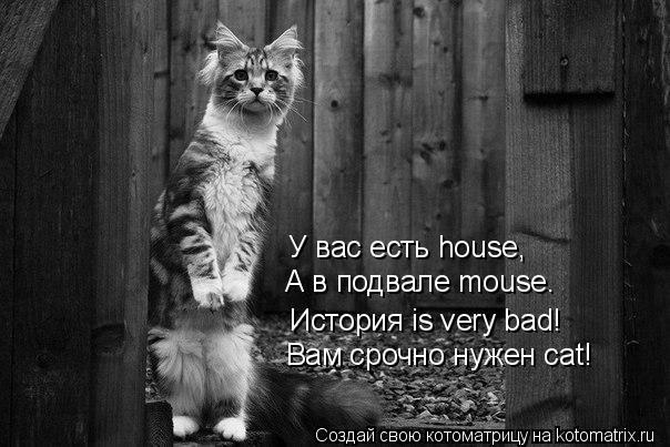 Котоматрица: У вас есть house, А в подвале mouse. История is very bad! Вам срочно нужен cat!