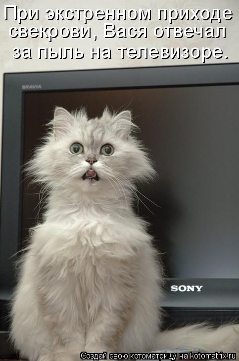 Котоматрица: свекрови, Вася отвечал за пыль на телевизоре. При экстренном приходе