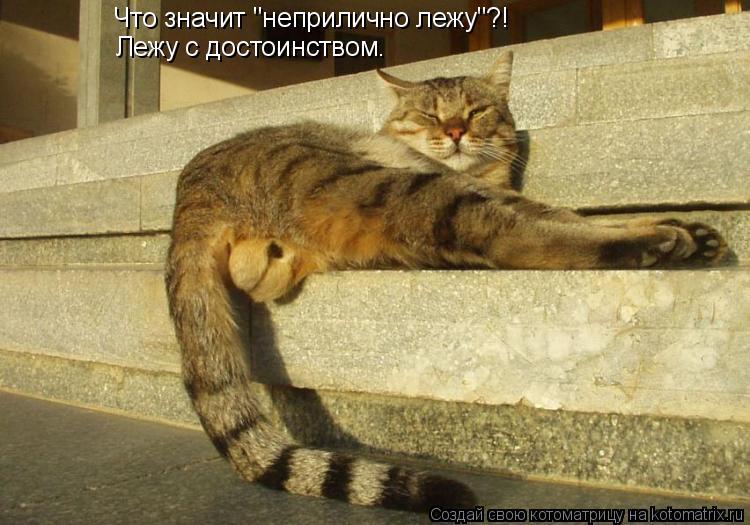 """Котоматрица: Что значит """"неприлично лежу""""?! Лежу с достоинством."""