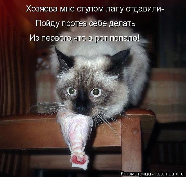 Котоматрица: Хозяева мне стулом лапу отдавили- Пойду протез себе делать Из первого,что в рот попало!