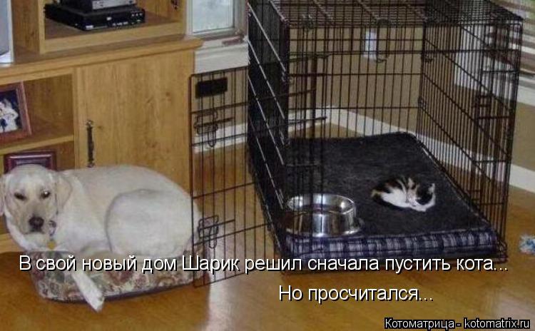 Котоматрица: В свой новый дом Шарик решил сначала пустить кота... Но просчитался...