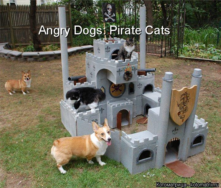 Котоматрица: Angry Dogs: Pirate Cats