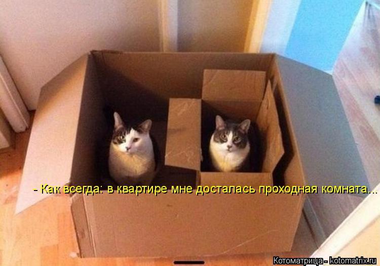 Котоматрица: - Как всегда: в квартире мне досталась проходная комната...