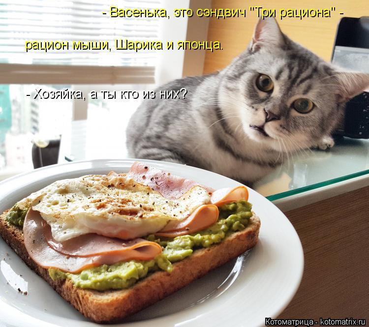 """Котоматрица: - Васенька, это сэндвич """"Три рациона"""" -  рацион мыши, Шарика и японца. - Хозяйка, а ты кто из них?"""