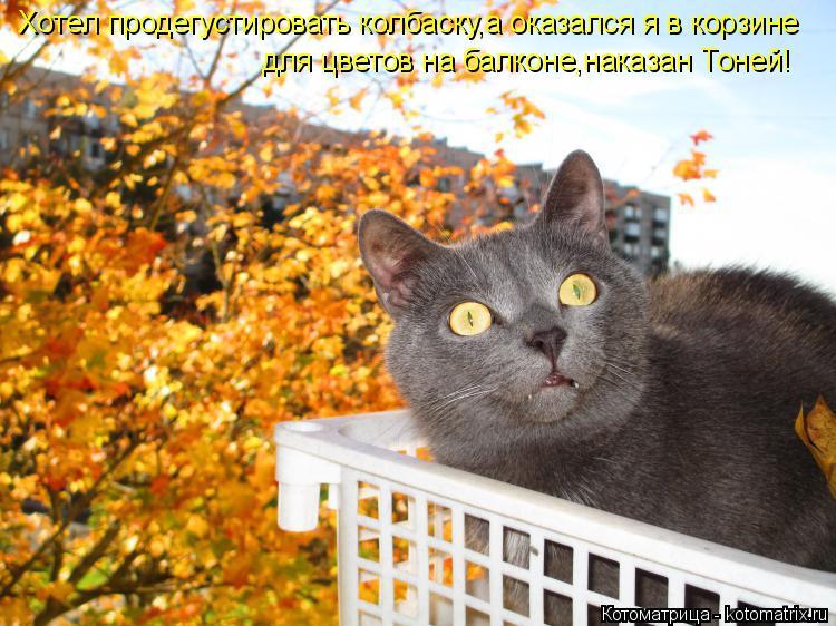 Котоматрица: Хотел продегустировать колбаску,а оказался я в корзине для цветов на балконе,наказан Тоней!