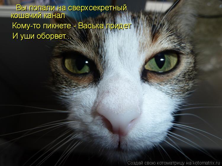 Котоматрица: Вы попали на сверхсекретный кошачий канал Кому-то пикнете - Васька придет И уши оборвет...