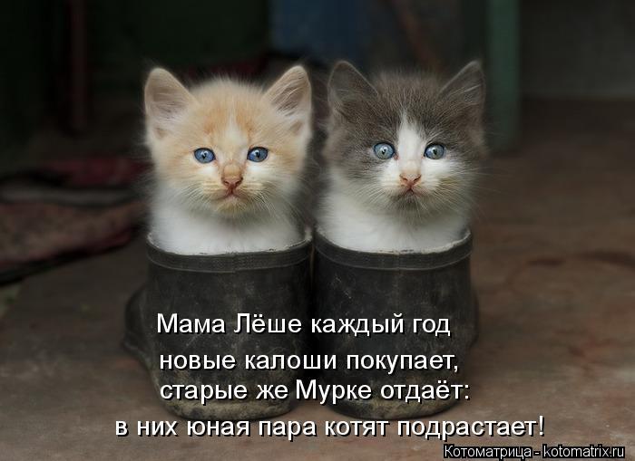 Котоматрица: Мама Лёше каждый год  новые калоши покупает,  старые же Мурке отдаёт:  в них юная пара котят подрастает!