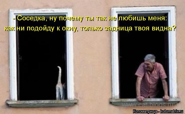 Котоматрица: - Соседка, ну почему ты так не любишь меня:  как ни подойду к окну, только задница твоя видна?