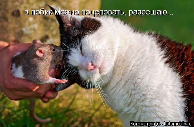 Котоматрица: в лобик можно поцеловать, разрешаю...