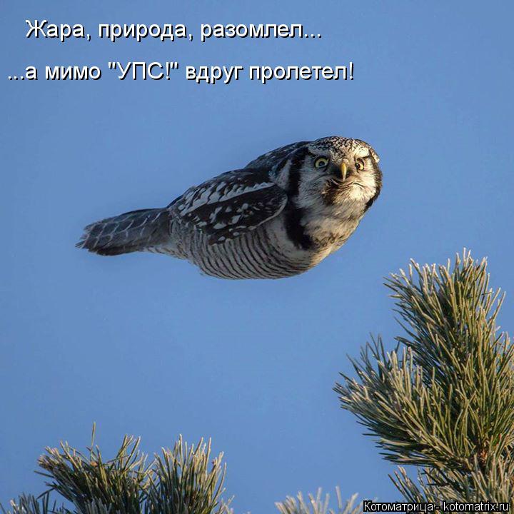 "Котоматрица: Жара, природа, разомлел... ...а мимо ""УПС!"" вдруг пролетел!"