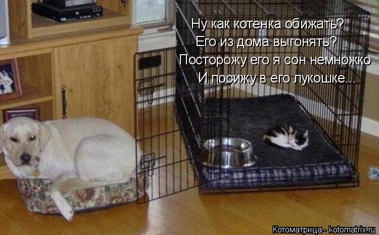 Котоматрица: Ну как котенка обижать? Его из дома выгонять? Посторожу его я сон немножко И посижу в его лукошке...