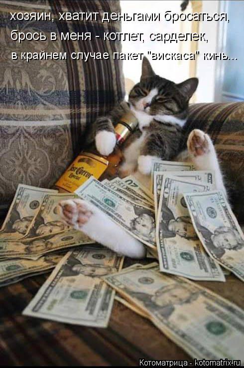 """Котоматрица: хозяин, хватит деньгами бросаться, брось в меня - котлет, сарделек, в крайнем случае пакет """"вискаса"""" кинь..."""
