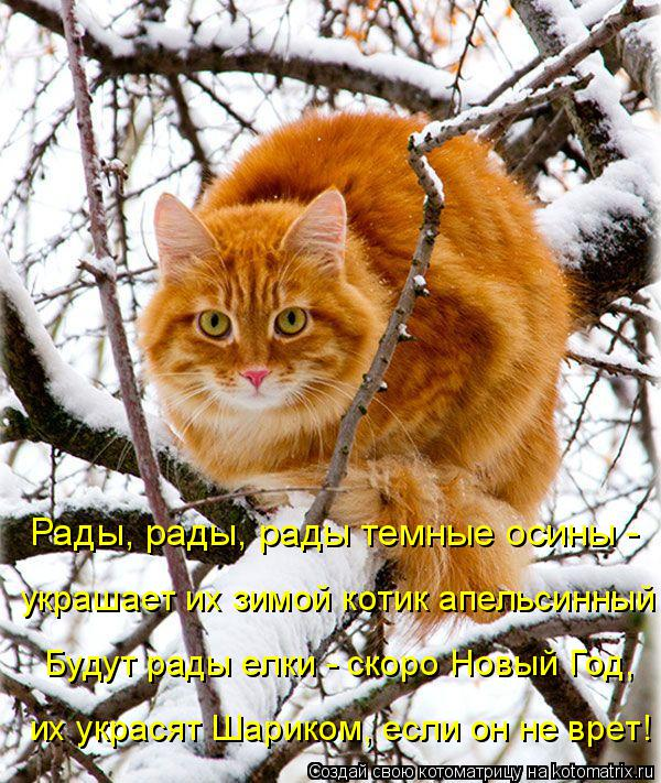 Котоматрица: Рады, рады, рады темные осины - украшает их зимой котик апельсинный Будут рады елки - скоро Новый Год, их украсят Шариком, если он не врет!