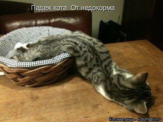 Котоматрица: Падеж кота. От недокорма.