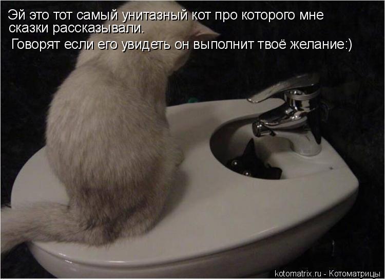 Котоматрица: Эй это тот самый унитазный кот про которого мне  сказки рассказывали. Говорят если его увидеть он выполнит твоё желание:)