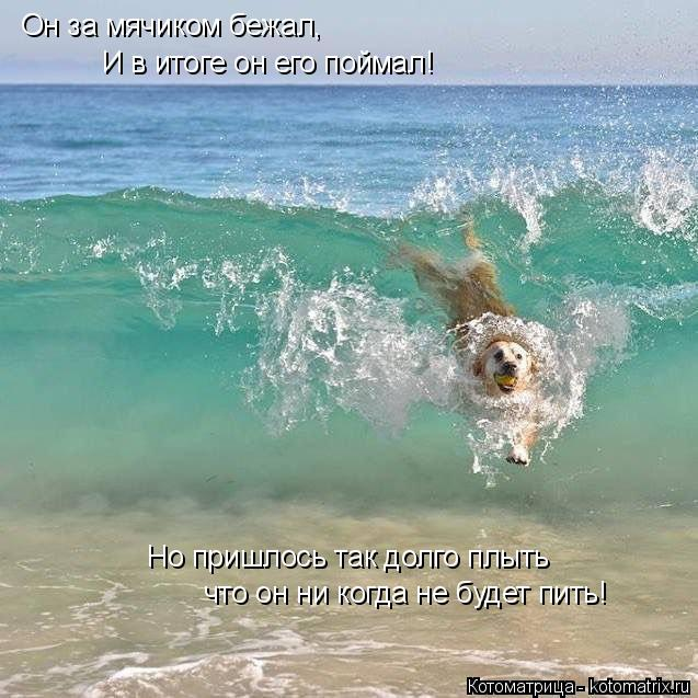 Котоматрица: Он за мячиком бежал, И в итоге он его поймал! Но пришлось так долго плыть что он ни когда не будет пить!