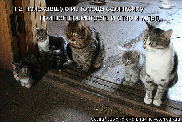 Котоматрица: на приехавшую из города сфинксиху пришел посмотреть и стар и млад...