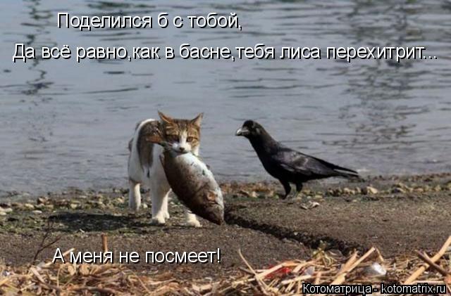 Котоматрица: Поделился б с тобой, Да всё равно,как в басне,тебя лиса перехитрит... А меня не посмеет!