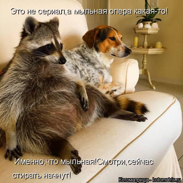 Котоматрица: Это не сериал,а мыльная опера какая-то! Именно,что мыльная!Смотри,сейчас  стирать начнут!