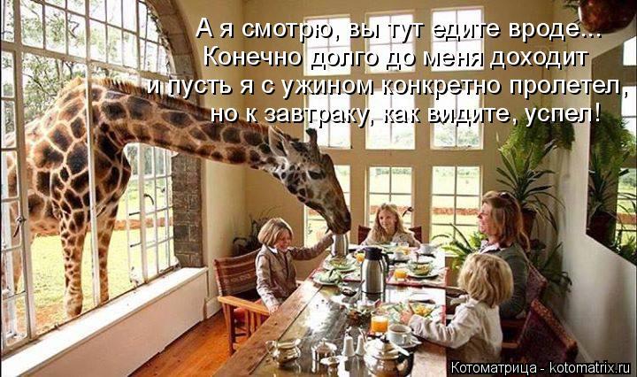 Котоматрица: А я смотрю, вы тут едите вроде... Конечно долго до меня доходит и пусть я с ужином конкретно пролетел, но к завтраку, как видите, успел!