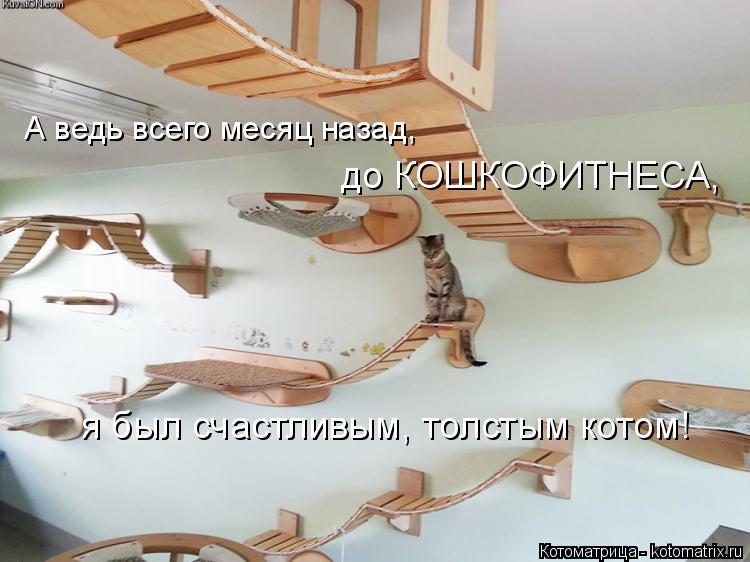 Котоматрица: А ведь всего месяц назад, до КОШКОФИТНЕСА, я был счастливым, толстым котом!