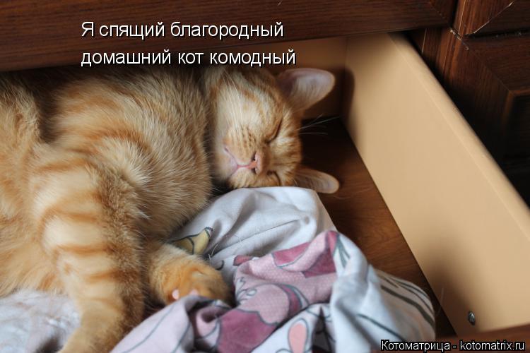 Котоматрица: Я спящий благородный домашний кот комодный домашний кот комодный