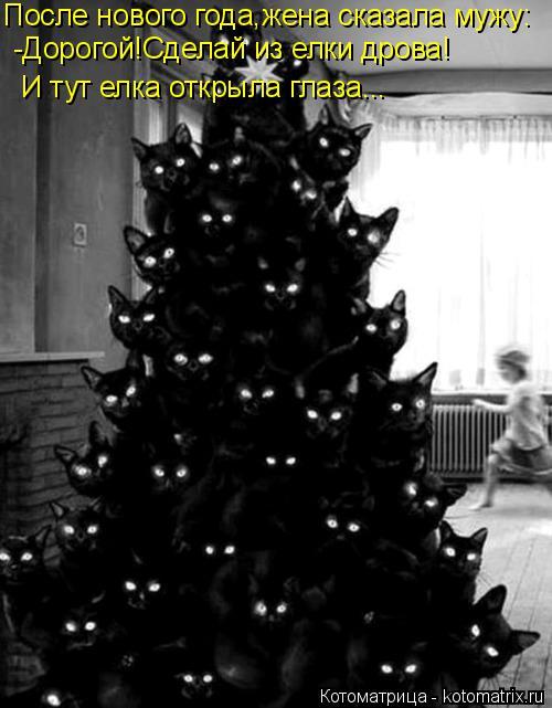 Котоматрица: После нового года,жена сказала мужу: -Дорогой!Сделай из елки дрова! И тут елка открыла глаза...