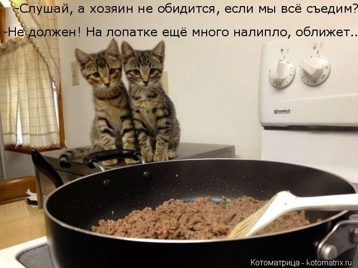Котоматрица: -Не должен! На лопатке ещё много налипло, оближет... -Слушай, а хозяин не обидится, если мы всё съедим?