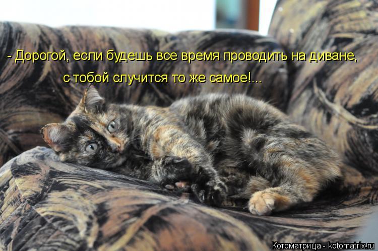 Котоматрица: - Дорогой, если будешь все время проводить на диване, с тобой случится то же самое!...