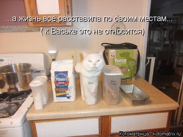 Котоматрица: ...а жизнь всё расставила по своим местам... ( к Ваське это не относится)