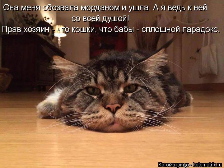 Котоматрица: Она меня обозвала морданом и ушла. А я ведь к ней со всей душой!  Прав хозяин - что кошки, что бабы - сплошной парадокс.