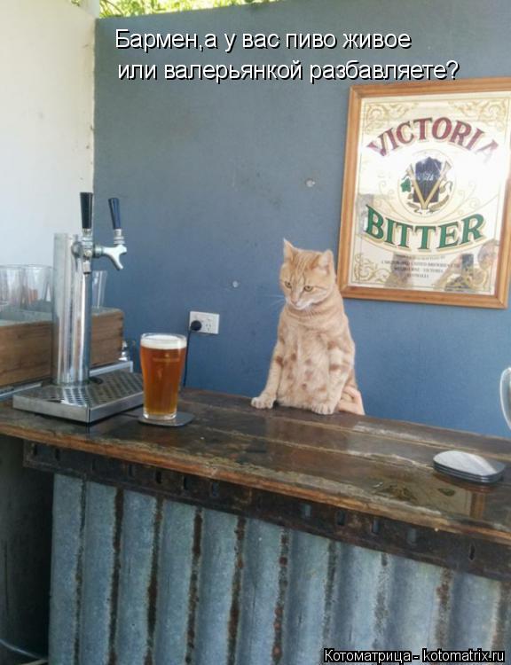 Котоматрица: Бармен,а у вас пиво живое или валерьянкой разбавляете?