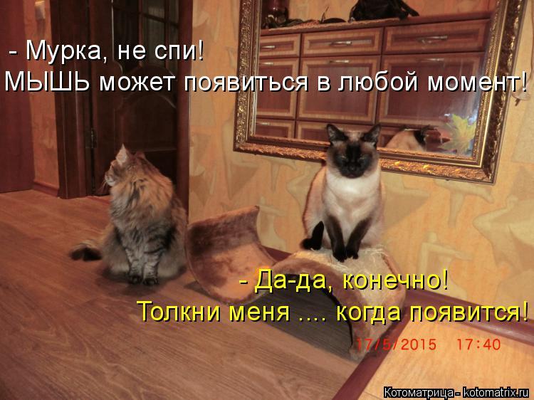 Котоматрица: - Мурка, не спи! МЫШЬ может появиться в любой момент! - Да-да, конечно! Толкни меня .... когда появится!