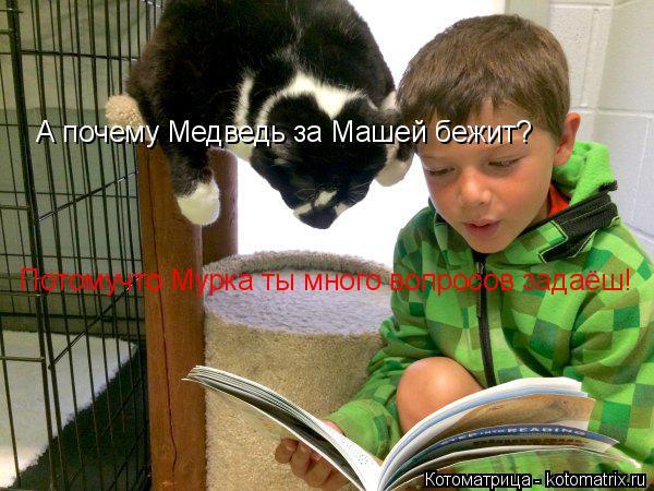 Котоматрица: А почему Медведь за Машей бежит? Потомучто Мурка ты много вопросов задаёш!