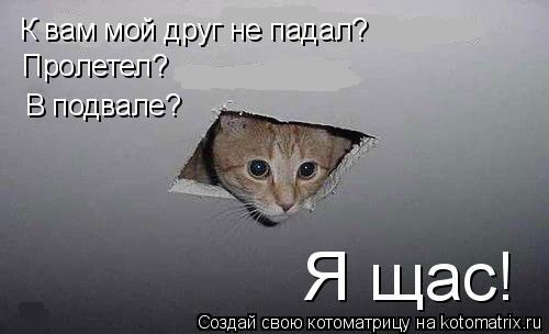 Котоматрица: К вам мой друг не падал? Пролетел? В подвале? Я щас!