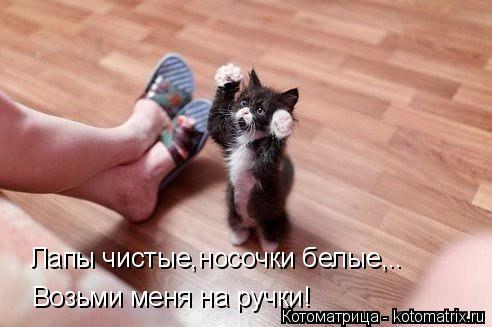 Котоматрица: Лапы чистые,носочки белые,.. Возьми меня на ручки!