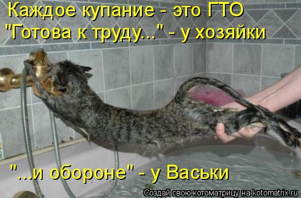 """Котоматрица: Каждое купание - это ГТО """"Готова к труду..."""" - у хозяйки """"...и обороне"""" - у Васьки"""