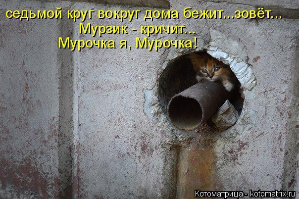 Котоматрица: Мурзик - кричит... седьмой круг вокруг дома бежит...зовёт... Мурочка я, Мурочка!