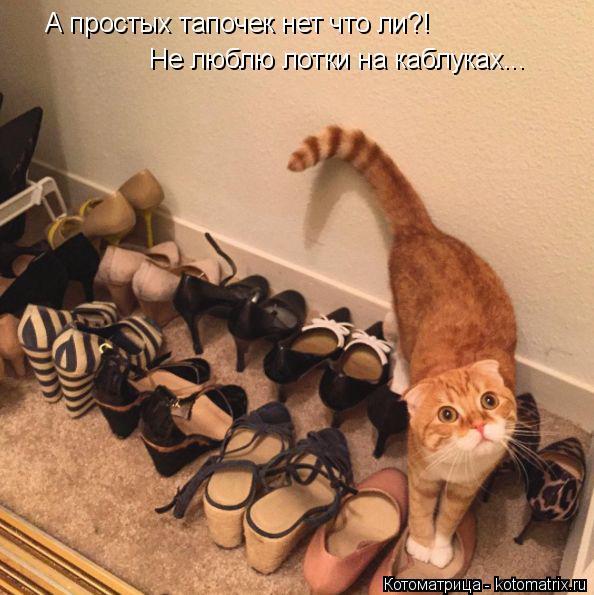 Котоматрица: А простых тапочек нет что ли?! Не люблю лотки на каблуках...