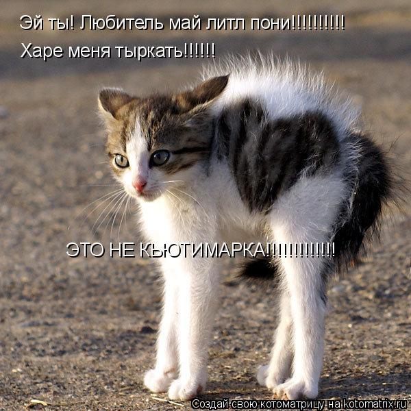 Котоматрица: Эй ты! Любитель май литл пони!!!!!!!!!! Харе меня тыркать!!!!!! ЭТО НЕ КЬЮТИМАРКА!!!!!!!!!!!!!