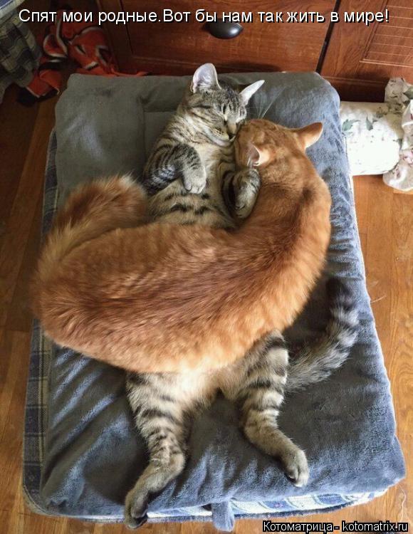 Котоматрица: Спят мои родные.Вот бы нам так жить в мире!