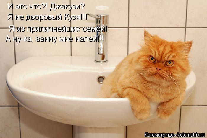 Котоматрица: И это что?! Джакузи? Я не дворовый Кузя!!!  Я из приличнейших семей! А ну-ка, ванну мне налей!!!