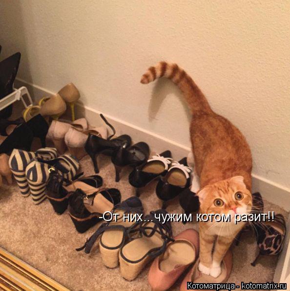 Котоматрица: -От них...чужим котом разит!!